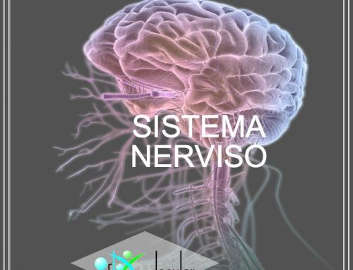 El sistema Neurológico