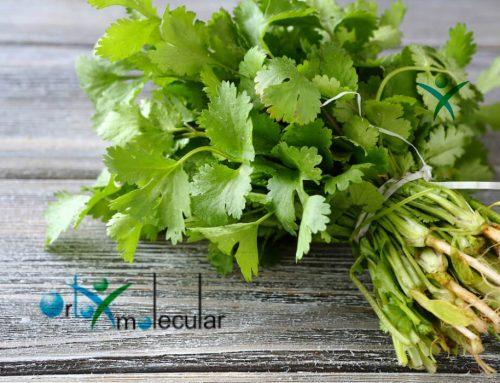 Mira los magnificos beneficios que nos otorga el cilantro