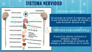 sistema nervioso IM